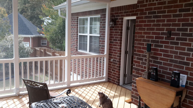 Cat on screened porch